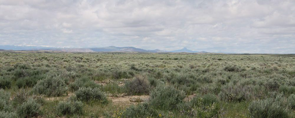 Big Horn Basin site, mid-May 2011