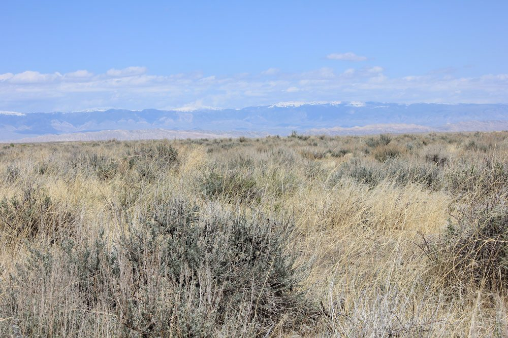 Bighorn Basin site, mid-May 2012.