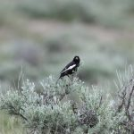 Fieldnotes from the Edge of the Wild: July 16, 2012