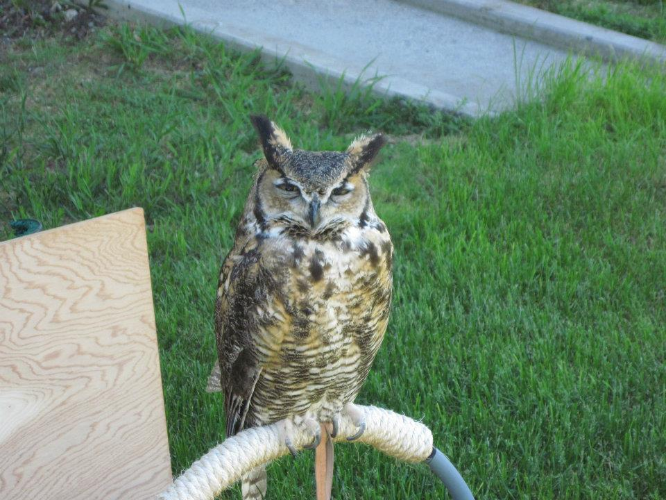 Teasdale the owl doesn't like children.