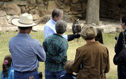 Greater Yellowstone Raptor Experience: Teasdale the great horned owl. Raptor01-CG