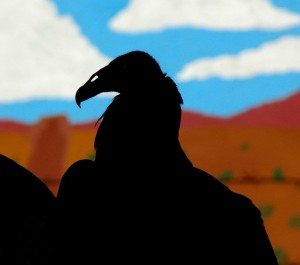 A silhouette of Suli, the turkey vulture at the Draper Museum Raptor Experience.