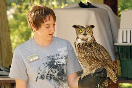 This owl was adopted from by the Buffalo Bill Center of the West from a library program. The local robins were being mean to him.