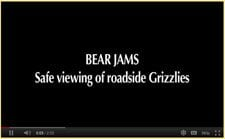 Bear Safety video 2