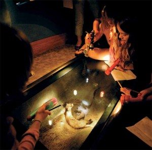 Visitors at a nighttime-themed event view a black-footed ferret exhibit by flashlight.