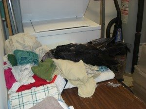 Suli, still a juvenile living in Kansas, helping with the laundry before she traveled to live with us.