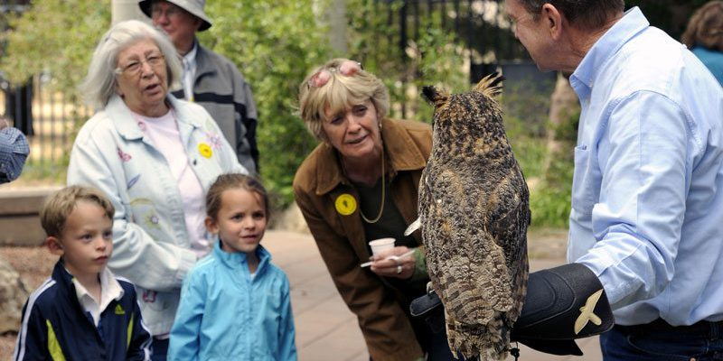 Sponsor a program: Greater Yellowstone Raptor Experience