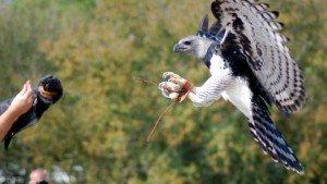 Harpy Landing 3