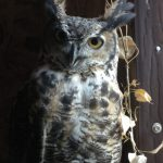 My Favorite Facts About Great Horned Owls