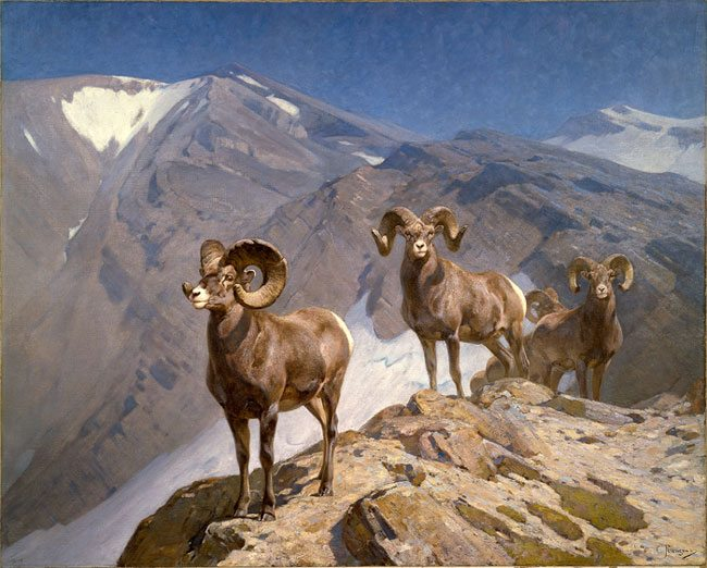 "Carl Rungius's The Mountaineers or Big Horn Sheep on Wilcox Pass,"" 1912. Oil on canvas. Gift of Jackson Hole Preserve, Inc. 16.93.1"