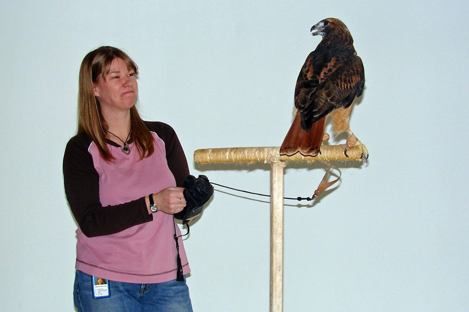 Isham, the red-tailed hawk, and Melissa Hill.