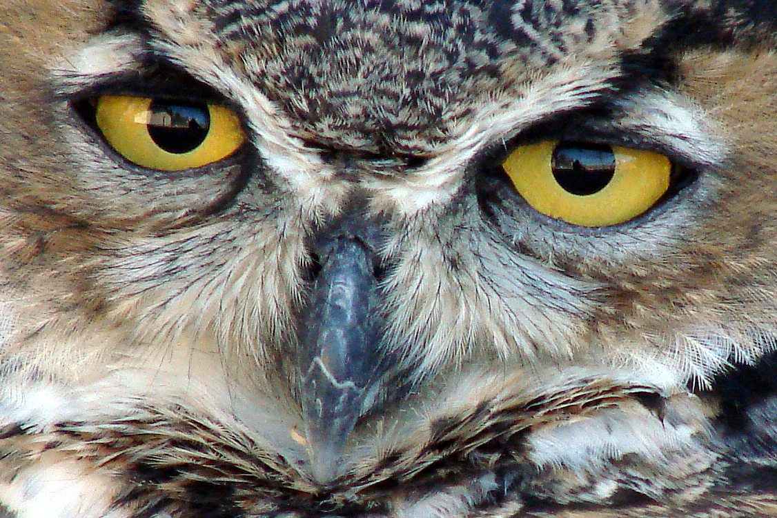 Teasdale's forward facing eyes make his gaze seem more like humans, as well as more intense.