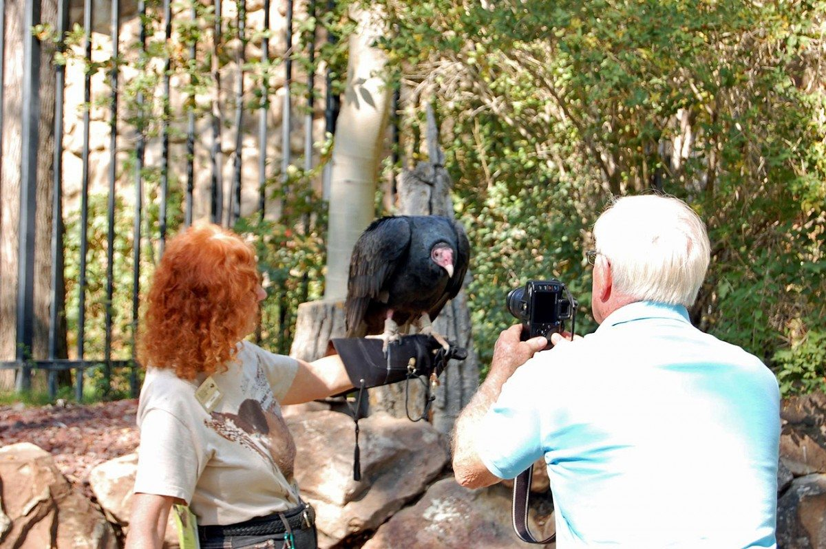 Suli helping to teach people how wonderful vultures are.