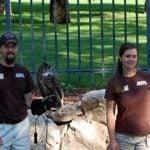 Draper Museum Raptor Experience Blog