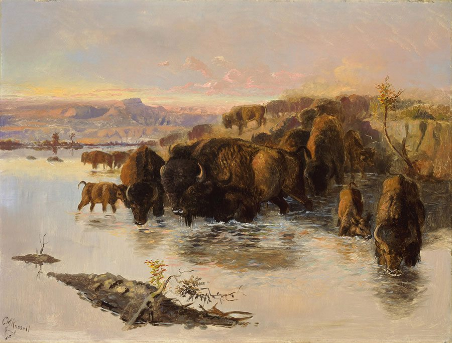 """Learn about Wildlife of the West on this tour. Charles M. Russell (1864 – 1926). """"The Buffalo Herd."""" Gift of William E. Weiss. 21.80"""