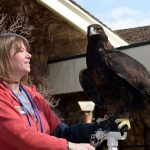 Melissa Hill with golden eagle Kateri of the Greater Yellowstone Raptor Experience