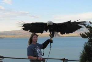 Melissa & bald eagle in front of Buffalo Bill Reservoir.
