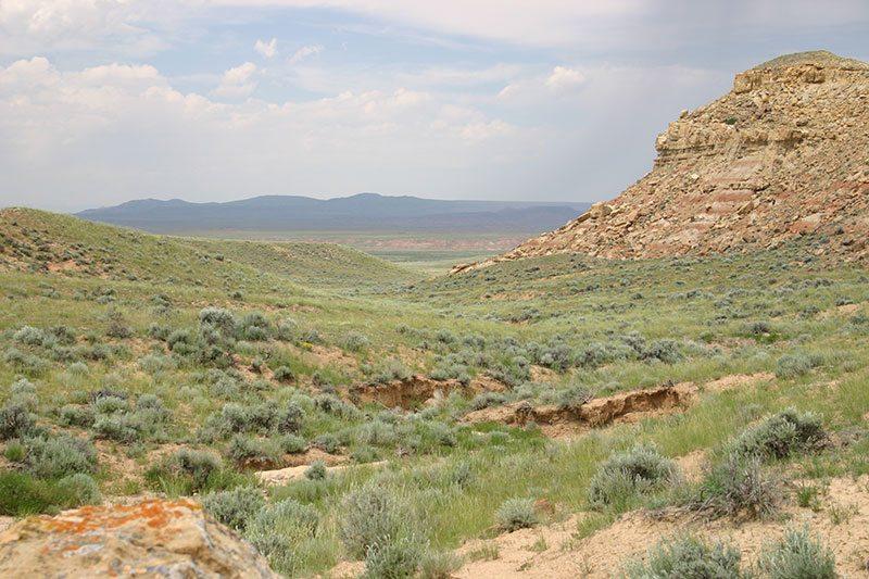 Sagebrush steppe landscape. Photo by C.R. Preston.