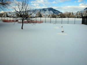 Yard full of snow, burying the birds' perches.