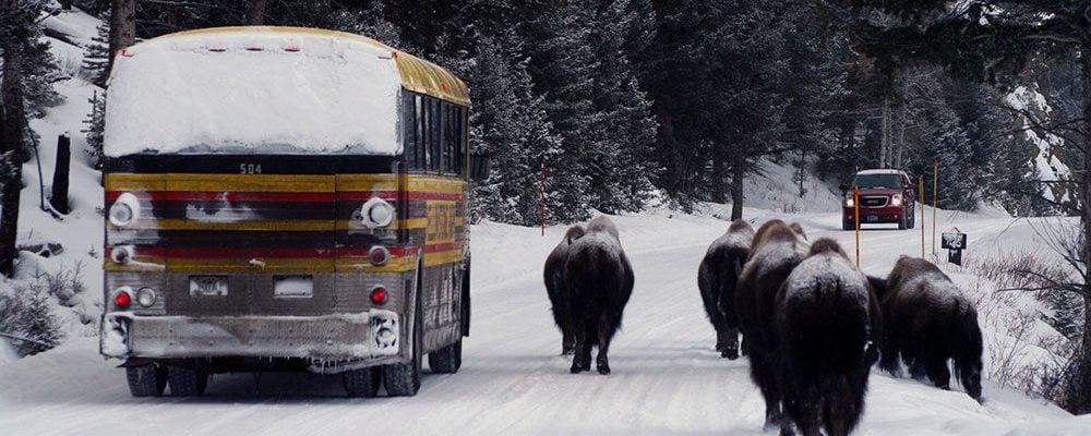 Winter in Yellowstone: ...a traffic jam?