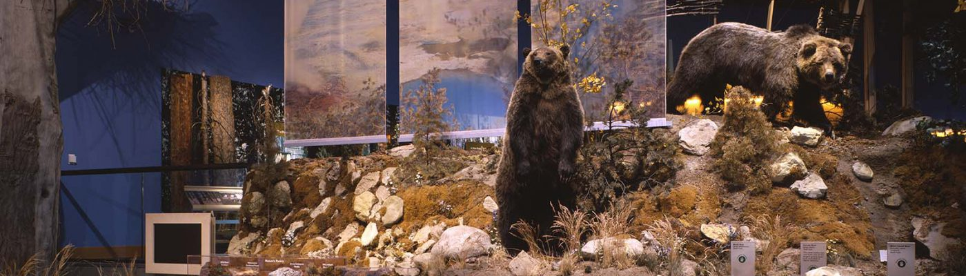 Grizzly bear exhibit, Draper Natural History Museum