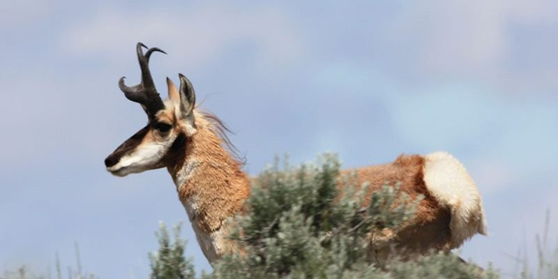 Speaker John Byers discusses pronghorn ecology and conservation at June 5 Lunchtime Expedition.