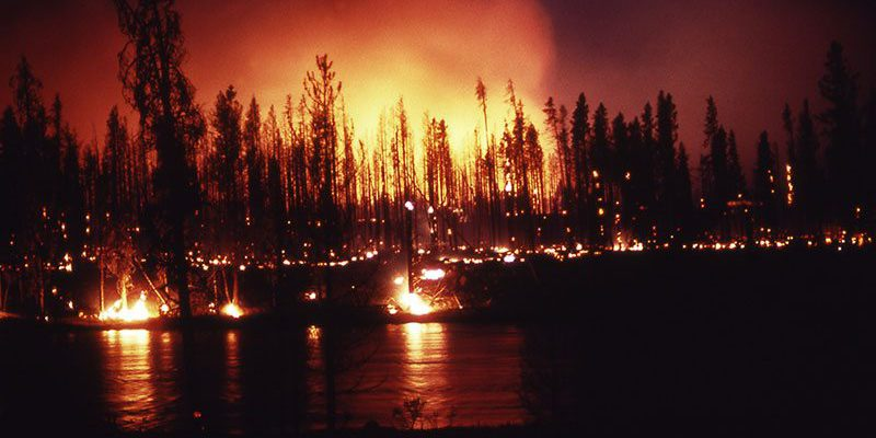 Ground fire at the Madison River during the Yellowstone fire in 1988. NPS photo.