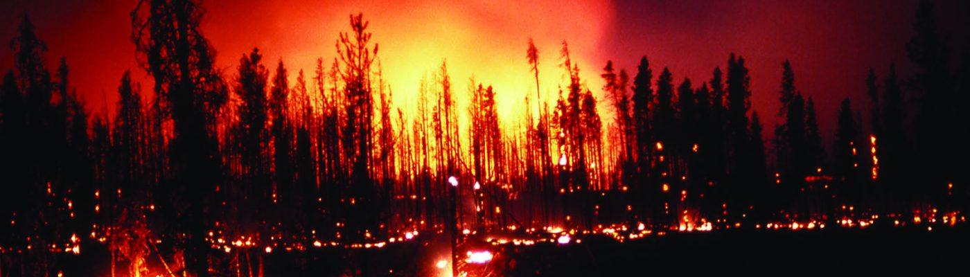 In the summer of 1988, scenes like this ground fire at the Madison River in Yellowstone National Park were alarmingly common. Deanna Marie Dulen, NPS photo. (detail)