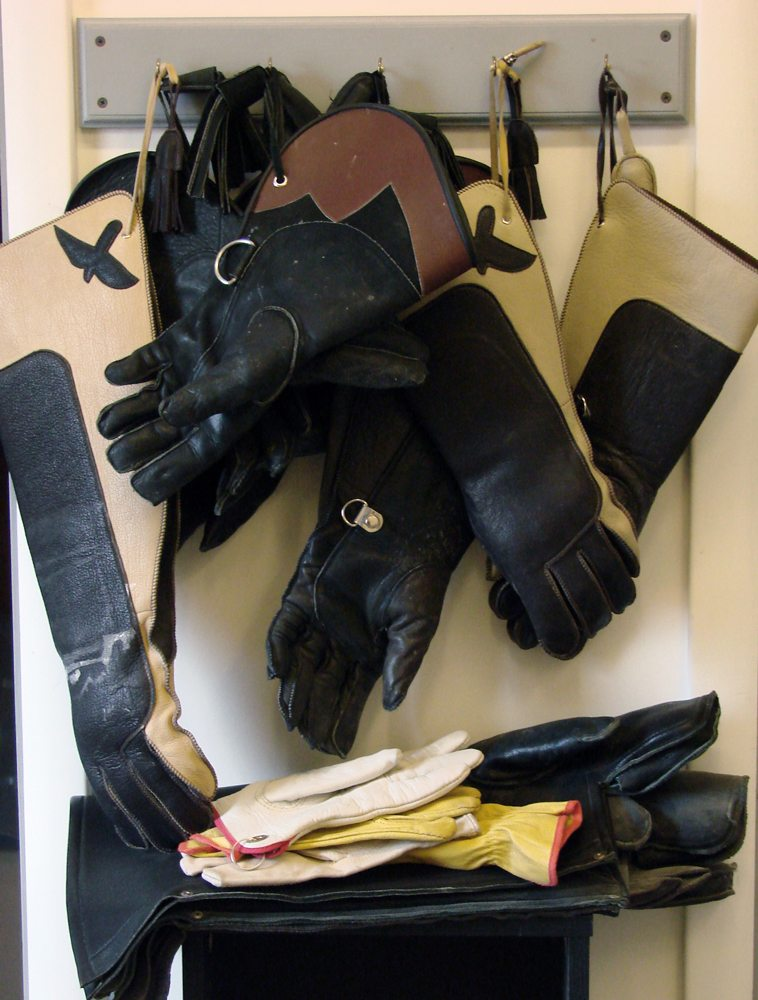 Work room wall showing a variety of gloves we use.