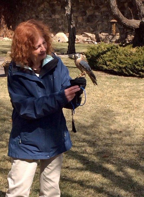 Here I am with Salem, our male American kestrel.