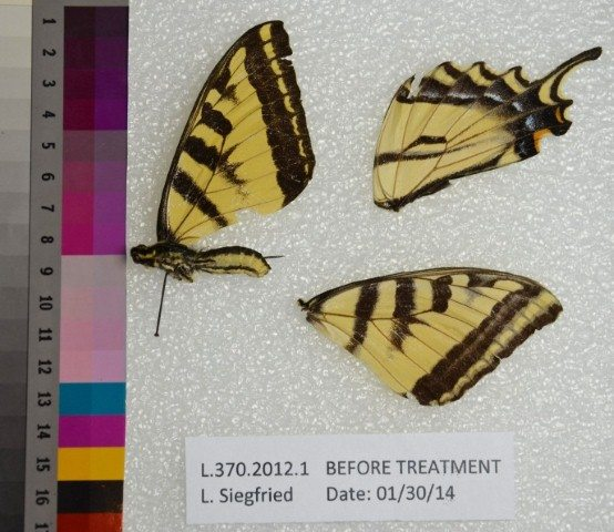Butterfly before treatment.