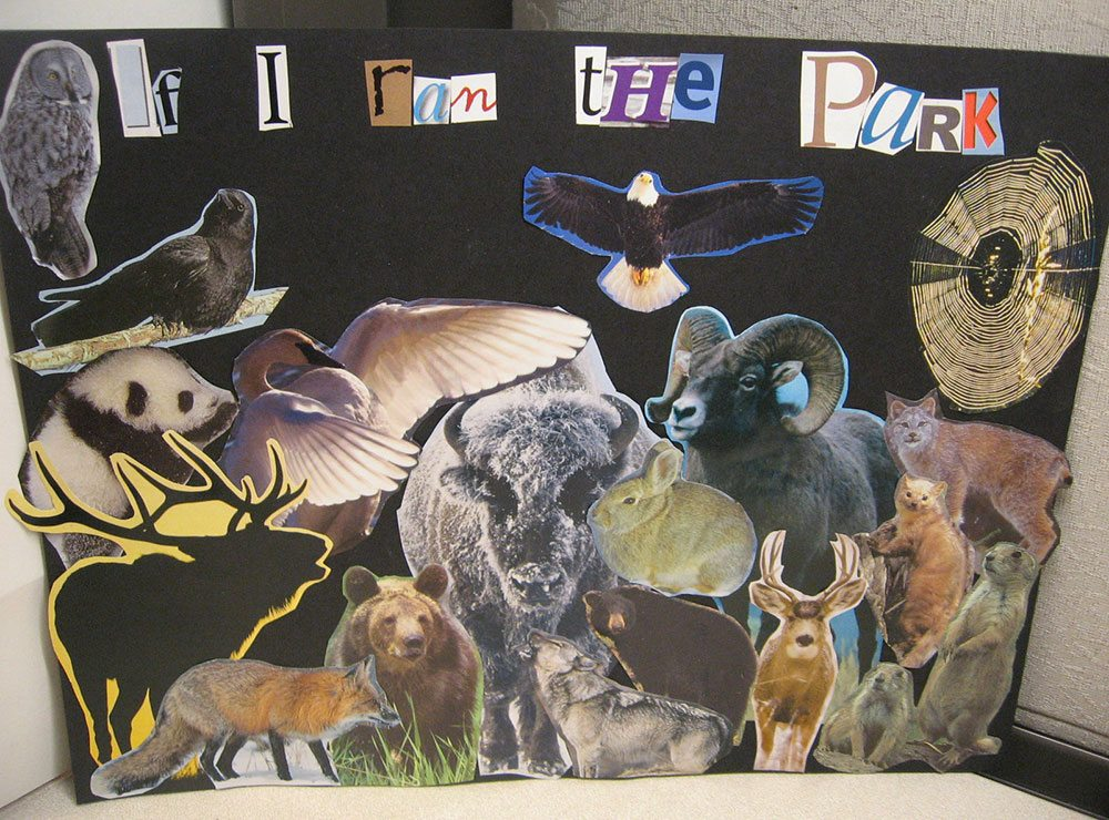 """""""If I ran the park"""" collage of animals"""