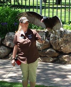"Raptor Experience ""mobile perch"" Melissa with Suli the turkey vulture."
