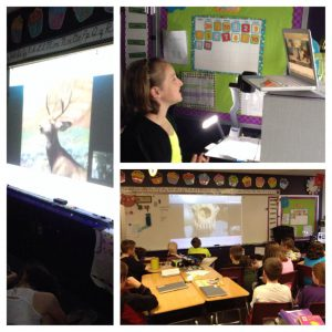 Animal Adaptations Skype Lesson; Skype in the classroom lessons