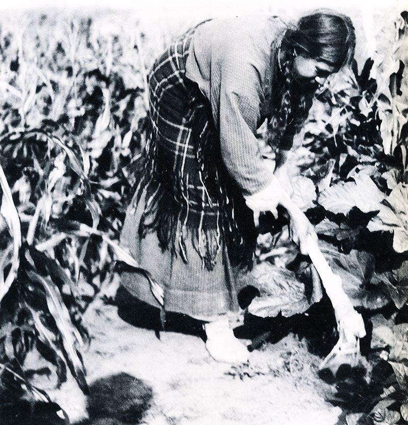 Sioux Woman, Nuxbaaga 9Hidatsa), demonstrating a bone hoe. Fort Berthold Reservation, North Dakota. Gilbert Wilson, 1912. Minnesota Historical Society.