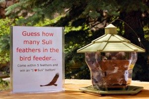 Bird feeder filled with turkey vulture feathers.
