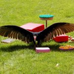 Every Vulture Deserves a Party