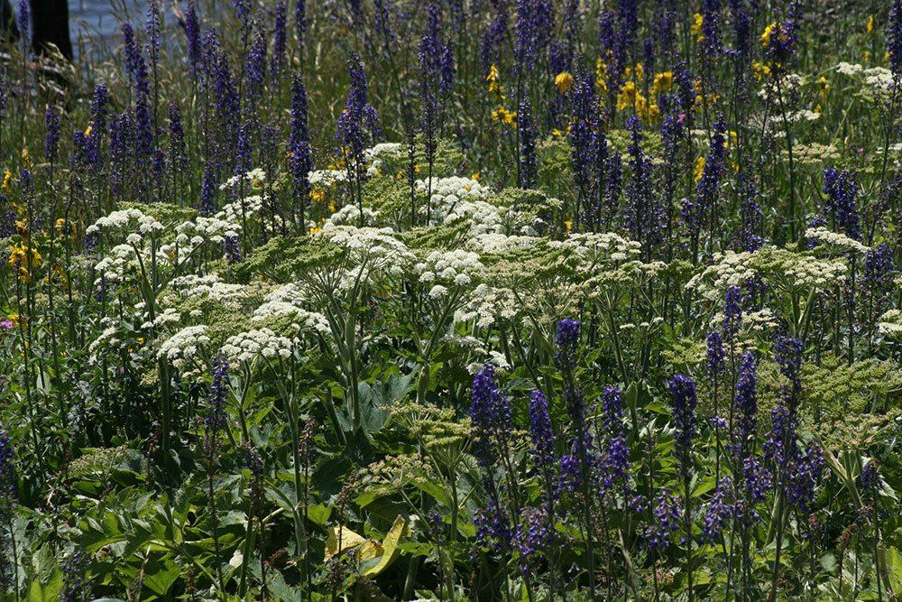 Wildflowers in a meadow