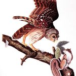 Points West Online: John James Audubon