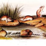 Points West Online: The Women in Audubon's Life