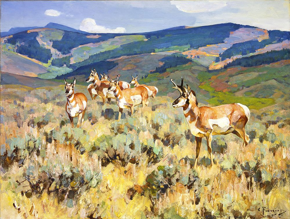 """Carl Rungius, """"In the Foothills (Antelope)"""" - and on my wall!"""