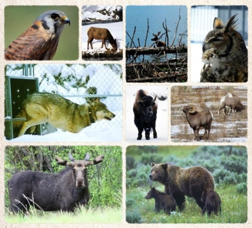Wildlifecollage