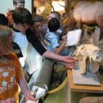 Park County, Wyoming, schools enjoy free group field trips to Center of the West for 2014 – 2015 school year