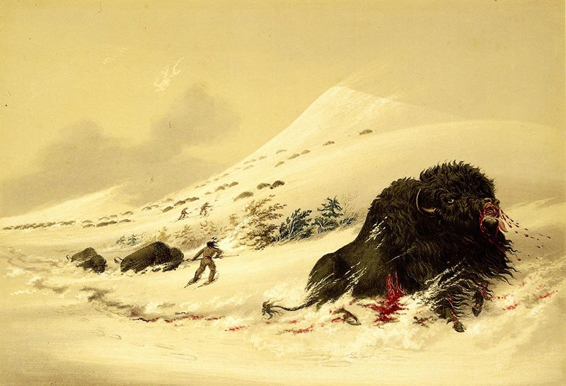 """George Catlin (1796-1872). """"Buffalo Hunt, Dying Bull in Snowdrift,"""" 1844. Hand-colored lithograph, 17 3/4 x 13 in. Gift of Mrs. Sydney T. Miller. 21.74.17"""
