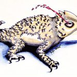 "The greater short-horned lizard, commonly called ""the horny toad,"" can dissuade predators by squirting blood from its eyes, a rare sight to catch on film. Artwork by Jennifer Osterkamp, Cody High School, 2008."
