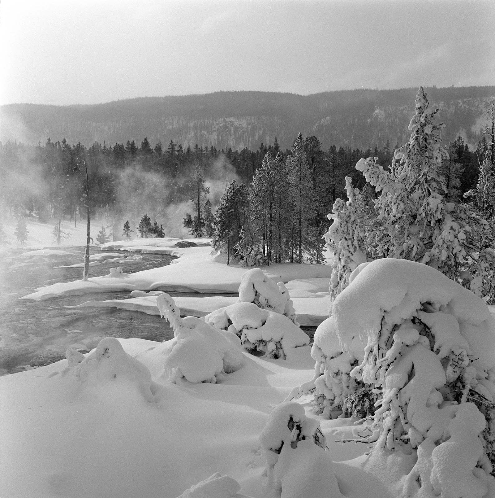 Jack Richard (1909-1992). Photograph negative. Snow on trees near hot springs in Old Faithful area of Yellowstone National Park, January 8, 1971. Jack Richard Photograph Collection. 89.57.11019.24