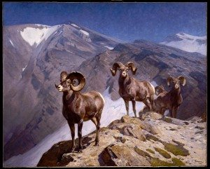 Carl Rungius's Bighorn Sheep