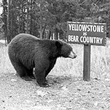 The Yellowstone National Park Collection consists of publications, memorabilia, souvenirs, academic publications, correspondence, photographic media, illustrations, postcards, and correspondence related to the park and its inception, existence, and development.