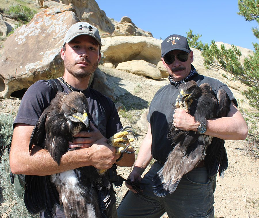 Research assistant Nate Horton and project director C.R. Preston (photograph by Richard Jones) with two recently captured eagles that will be banded and released.