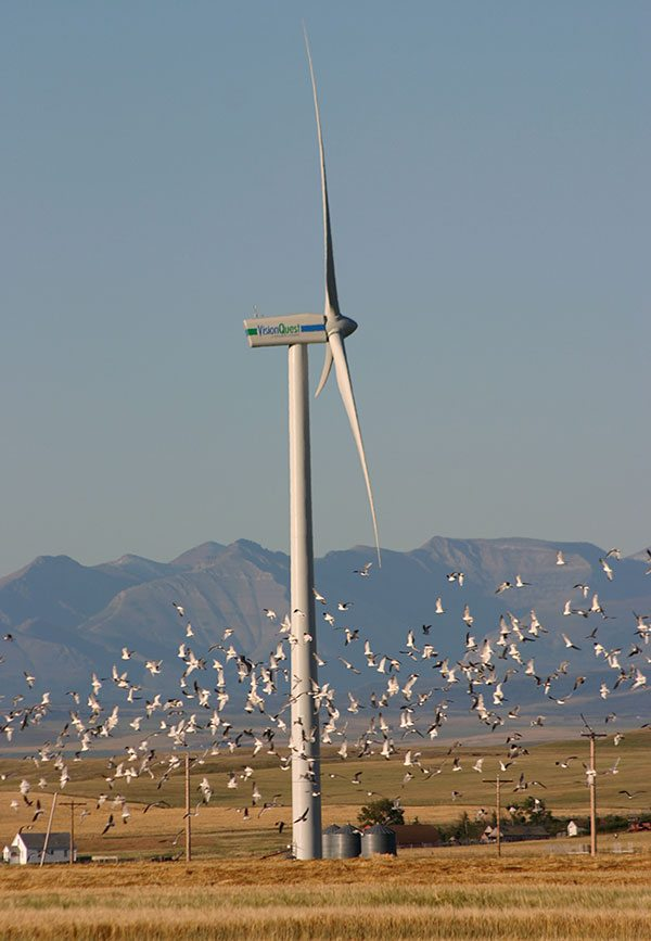 Wind turbine surrounded by birds. Summerview Wind Farm, Pincher Creek, Alberta, Canada. David Dodge, Pembina Institute, 2005.